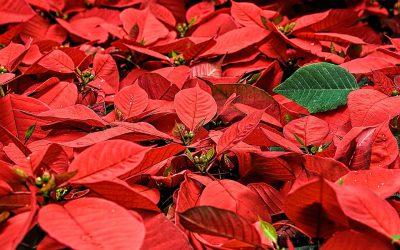 Feliz Navidad y Próspero Año